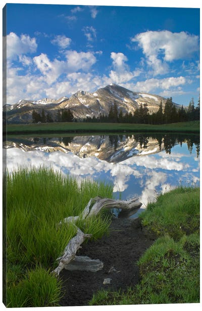 Mammoth Peak And Scattered Clouds Reflected In Seasonal Pool, Upper Dana Meadow, Yosemite National Park, California II Canvas Art Print