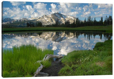 Mammoth Peak And Scattered Clouds Reflected In Seasonal Pool, Upper Dana Meadow, Yosemite National Park, California III Canvas Art Print