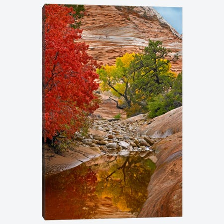 Maple And Cottonwood Autumn Foliage, Zion National Park, Utah I Canvas Print #TFI567} by Tim Fitzharris Canvas Artwork