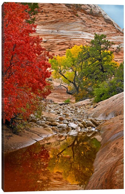 Maple And Cottonwood Autumn Foliage, Zion National Park, Utah I Canvas Art Print