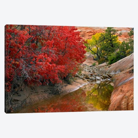 Maple And Cottonwood Autumn Foliage, Zion National Park, Utah II Canvas Print #TFI568} by Tim Fitzharris Canvas Art Print
