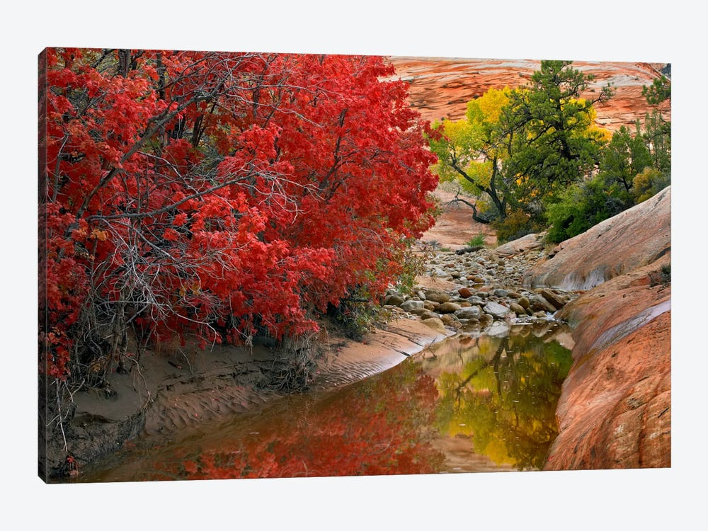 Maple And Cottonwood Autumn Foliage, Zion National Park, Utah II by Tim Fitzharris 1-piece Canvas Wall Art