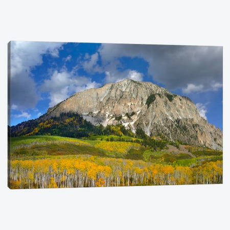 Marcellina Mountain And Aspen Forest In Raggeds Wilderness, Colorado Canvas Print #TFI572} by Tim Fitzharris Canvas Artwork