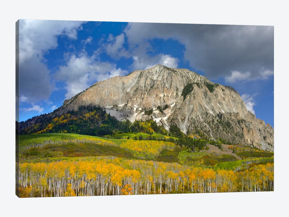 Marcellina Mountain And Aspen Forest In Raggeds Wilderness, Colorado by Tim Fitzharris 1-piece Canvas Art Print