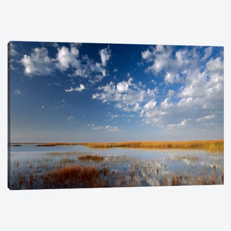 Marsh, Padre Island National Seashore, Texas Canvas Print #TFI579} by Tim Fitzharris Canvas Artwork