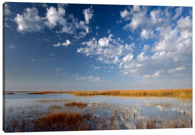 Marsh, Padre Island National Seashore, Texas Canvas Art Print