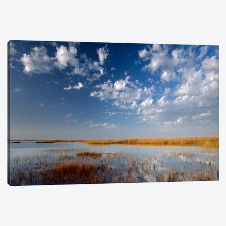 Marsh, Padre Island National Seashore, Texas Canvas Print #TFI579} by Tim Fitzharris Canvas Artwork