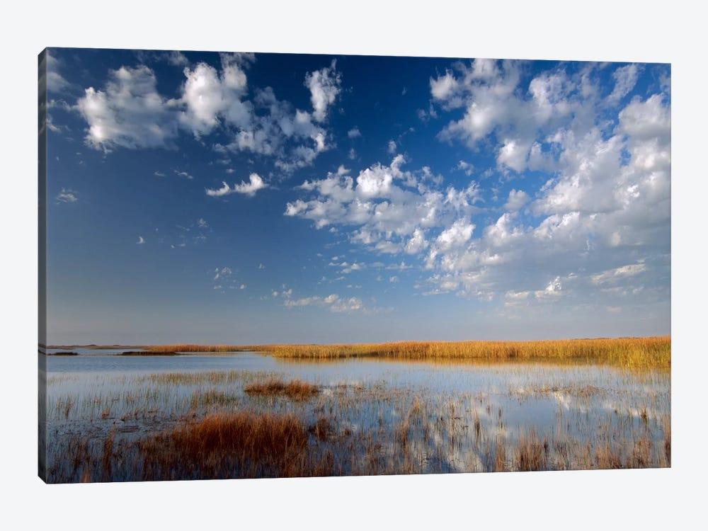 Marsh, Padre Island National Seashore, Texas by Tim Fitzharris 1-piece Canvas Wall Art