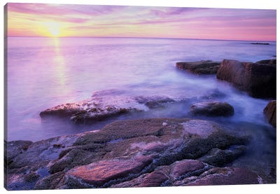 Atlantic Coast Near Thunder Hole, Acadia National Park, Maine V Canvas Art Print