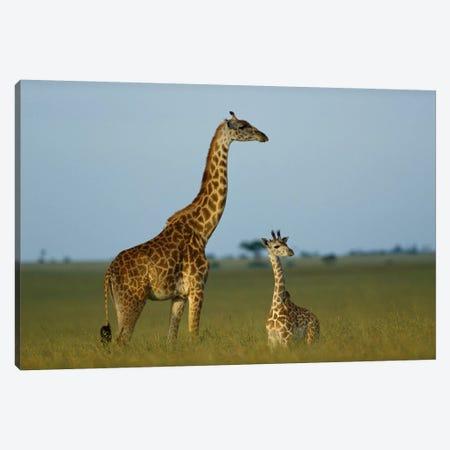 Masai Giraffe Adult And Foal On Savanna, Kenya Canvas Print #TFI580} by Tim Fitzharris Canvas Print