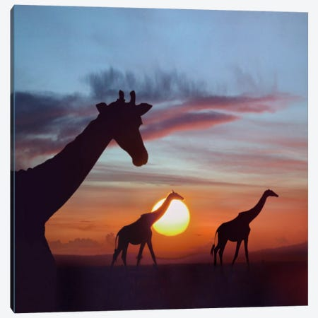 Masai Giraffe Trio At Sunrise, Masai Mara, Kenya, Composite Image Canvas Print #TFI584} by Tim Fitzharris Canvas Artwork