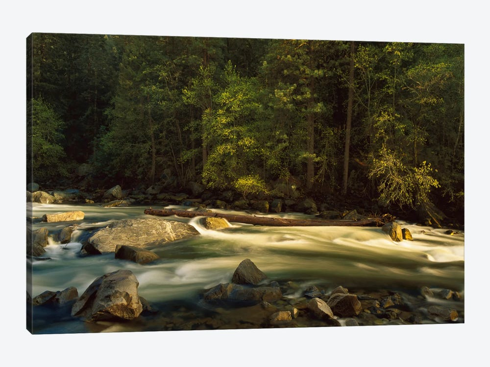 Merced River Flowing Through The Valley Floor, Yosemite National Park, California by Tim Fitzharris 1-piece Canvas Print