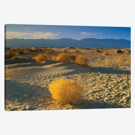 Mesquite Flat Sand Dunes, Death Valley National Park, California I Canvas Print #TFI593} by Tim Fitzharris Canvas Art