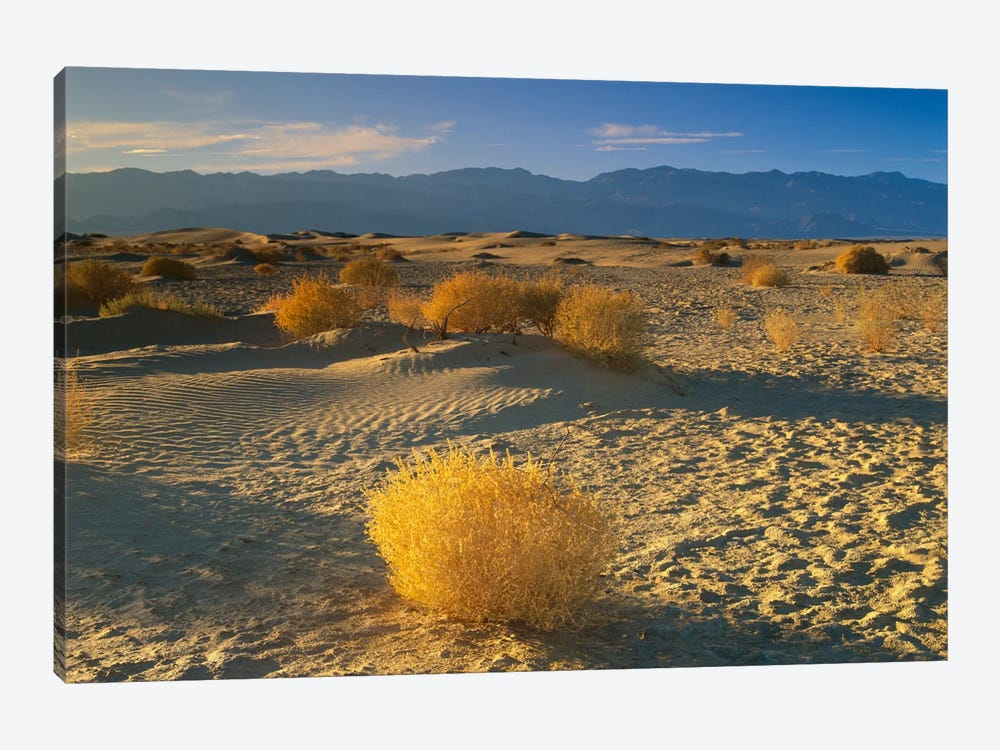Mesquite Flat Sand Dunes, Death Valley National Park, California I by Tim Fitzharris 1-piece Canvas Wall Art