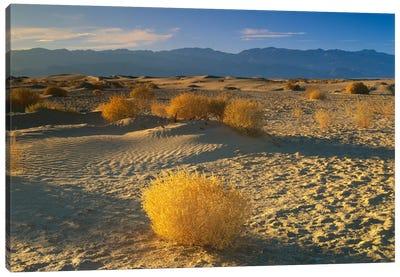 Mesquite Flat Sand Dunes, Death Valley National Park, California I Canvas Art Print