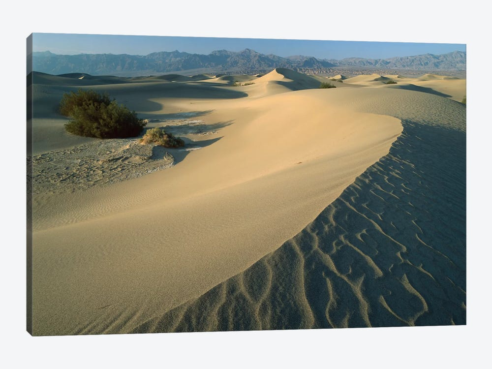 Mesquite Flat Sand Dunes, Death Valley National Park, California IV by Tim Fitzharris 1-piece Canvas Print