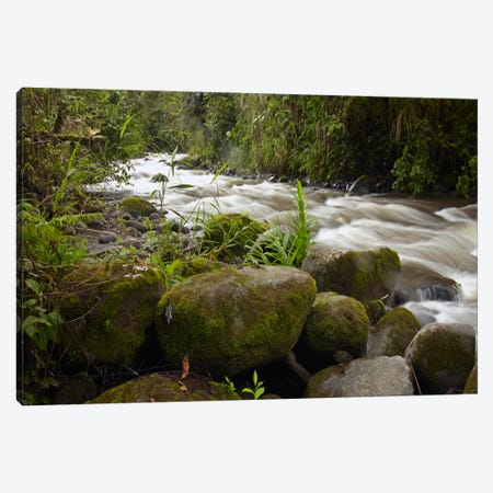 Mindo River Flowing Through Cloud Forest, Ecuador Canvas Print #TFI599} by Tim Fitzharris Canvas Artwork