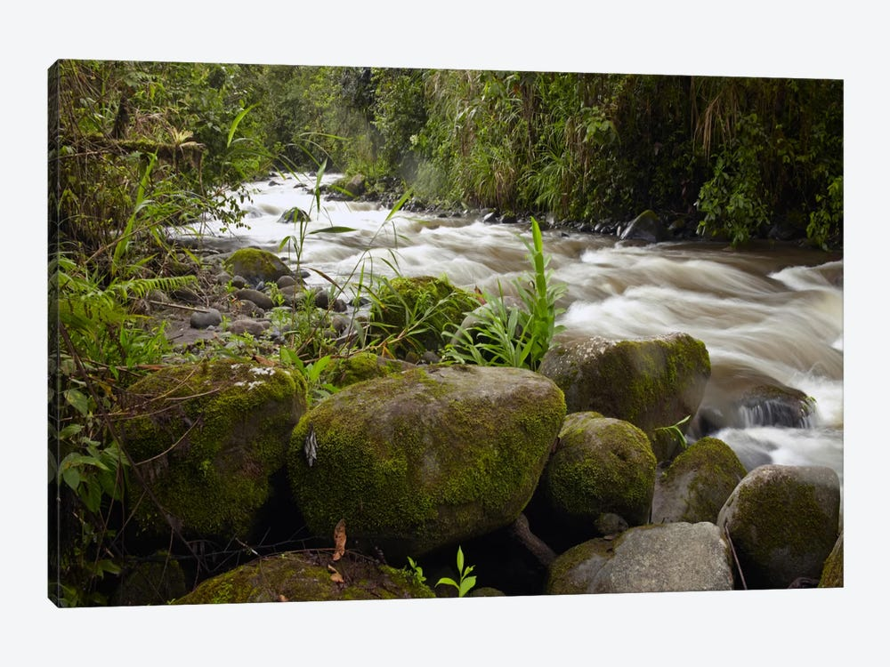 Mindo River Flowing Through Cloud Forest, Ecuador by Tim Fitzharris 1-piece Canvas Art