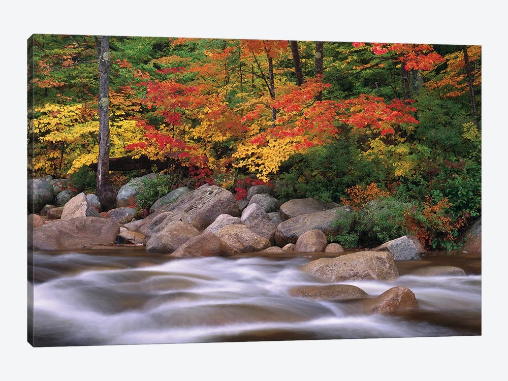 Autumn Along Swift River, White Mountains National Forest, New Hampshire - Horizontal by Tim Fitzharris 1-piece Canvas Art