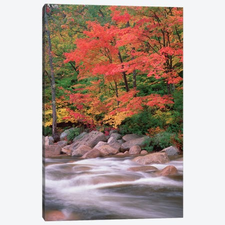 Autumn Along Swift River, White Mountains National Forest, New Hampshire - Vertical Canvas Print #TFI61} by Tim Fitzharris Canvas Artwork