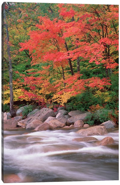 Autumn Along Swift River, White Mountains National Forest, New Hampshire - Vertical Canvas Art Print