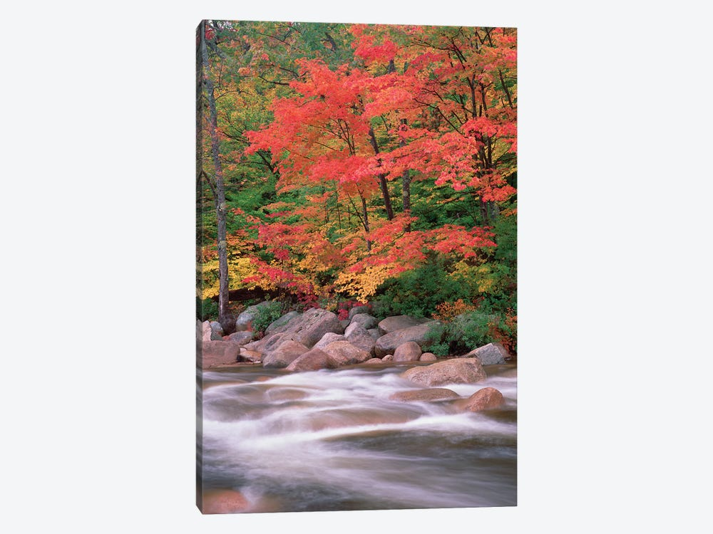 Autumn Along Swift River, White Mountains National Forest, New Hampshire - Vertical by Tim Fitzharris 1-piece Canvas Art Print