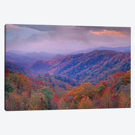 Autumn Deciduous Forest, Great Smoky Mountains National Park, Tennessee Canvas Print #TFI63} by Tim Fitzharris Canvas Art