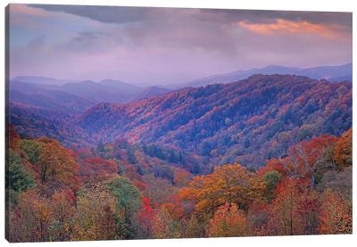 Autumn Deciduous Forest, Great Smoky Mountains National Park, Tennessee Canvas Art Print