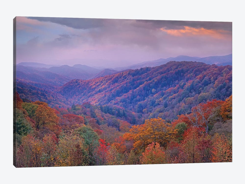 Autumn Deciduous Forest, Great Smoky Mountains National Park, Tennessee by Tim Fitzharris 1-piece Canvas Art Print