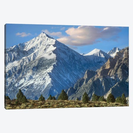 Mount Tom, Sierra Nevada, John Muir Wilderness, Inyo National Forest, California Canvas Print #TFI647} by Tim Fitzharris Canvas Print