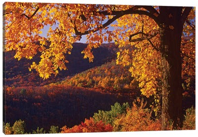 Autumn Deciduous Forest, Shenandoah National Park, Virginia Canvas Art Print