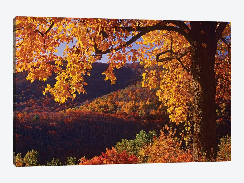 Autumn Deciduous Forest, Shenandoah National Park, Virginia by Tim Fitzharris 1-piece Canvas Artwork