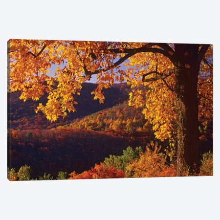 Autumn Deciduous Forest, Shenandoah National Park, Virginia Canvas Print #TFI64} by Tim Fitzharris Art Print