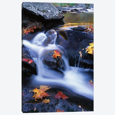 Autumn Leaves In Little River, Great Smoky Mountains National Park, Tennessee - Vertical Canvas Print #TFI66} by Tim Fitzharris Canvas Art Print