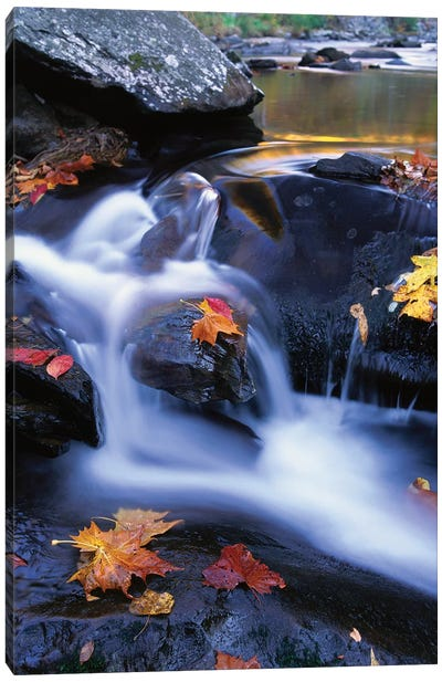 Autumn Leaves In Little River, Great Smoky Mountains National Park, Tennessee - Vertical Canvas Art Print