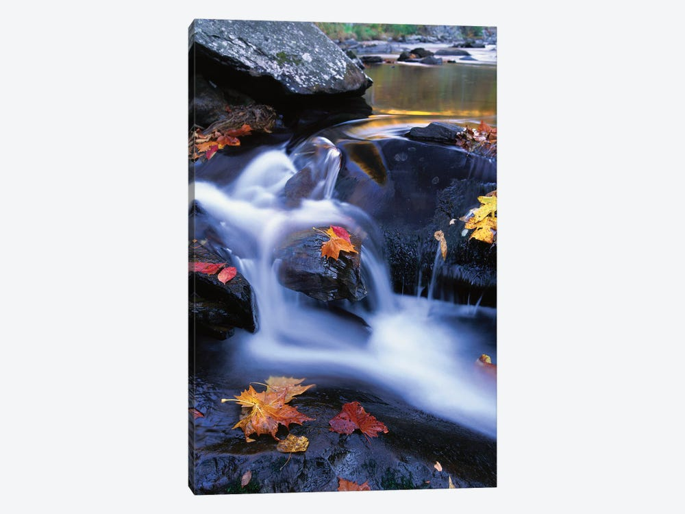 Autumn Leaves In Little River, Great Smoky Mountains National Park, Tennessee - Vertical by Tim Fitzharris 1-piece Canvas Art