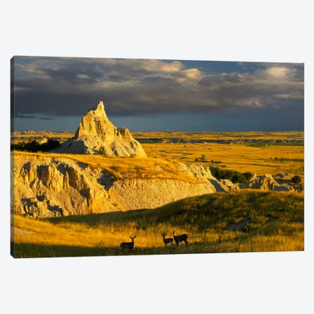 Mule Deer Trio In The Grasslands Of Badlands National Park, South Dakota Canvas Print #TFI676} by Tim Fitzharris Canvas Art