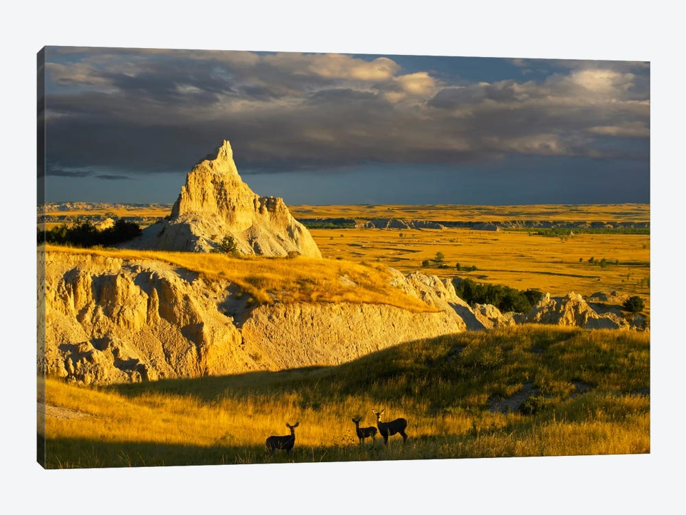 Mule Deer Trio In The Grasslands Of Badlands National Park, South Dakota by Tim Fitzharris 1-piece Canvas Art Print