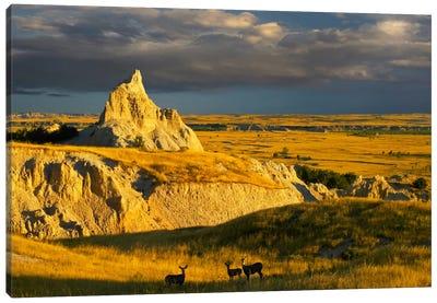 Mule Deer Trio In The Grasslands Of Badlands National Park, South Dakota Canvas Art Print