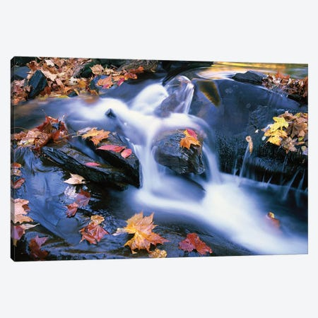 Autumn Leaves In Little River, Great Smoky Mountains National Park, Tennessee - Horizontal Canvas Print #TFI67} by Tim Fitzharris Art Print