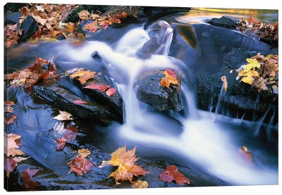Autumn Leaves In Little River, Great Smoky Mountains National Park, Tennessee - Horizontal Canvas Art Print