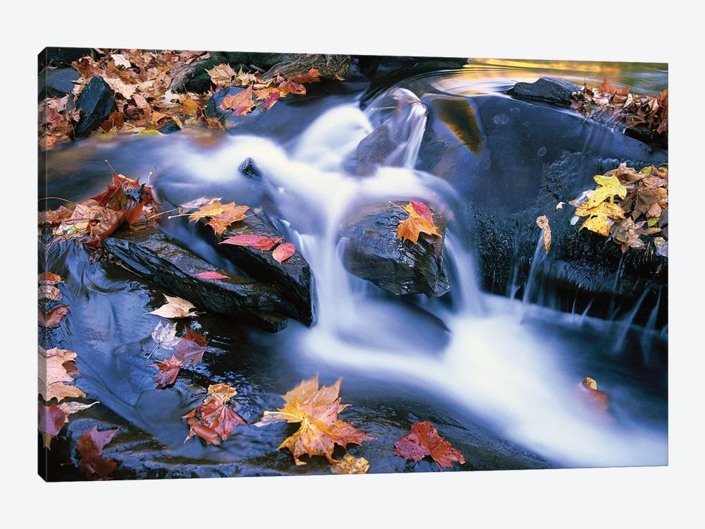 Autumn Leaves In Little River, Great Smoky Mountains National Park, Tennessee - Horizontal by Tim Fitzharris 1-piece Art Print