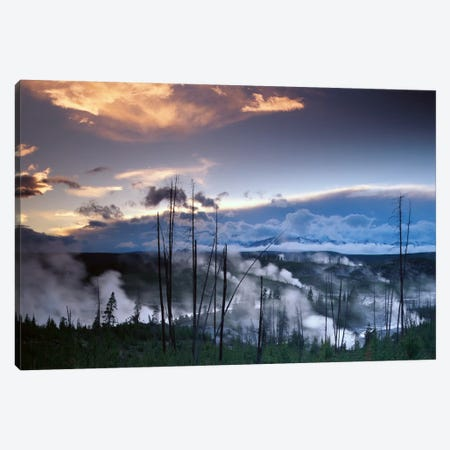 Norris Geyser Basin With Steam Plumes From Geysers, Yellowstone National Park, Wyoming Canvas Print #TFI684} by Tim Fitzharris Canvas Print