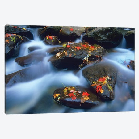 Autumn Leaves On Wet Boulders In Stream, Great Smoky Mountains National Park, North Carolina Canvas Print #TFI68} by Tim Fitzharris Canvas Wall Art
