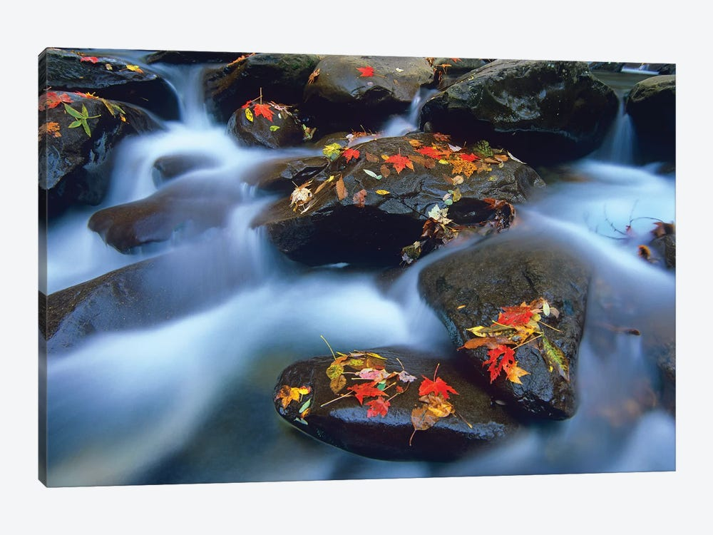 Autumn Leaves On Wet Boulders In Stream, Great Smoky Mountains National Park, North Carolina by Tim Fitzharris 1-piece Canvas Artwork