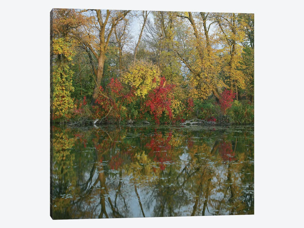 Autumn Reflection On Marsh's Lake, Spruce Woods Provincial Park, Canada by Tim Fitzharris 1-piece Canvas Art Print