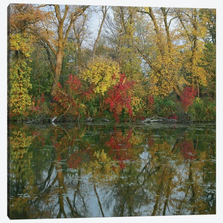 Autumn Reflection On Marsh's Lake, Spruce Woods Provincial Park, Canada Canvas Print #TFI69} by Tim Fitzharris Canvas Wall Art