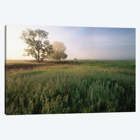 Oak Trees Shrouded In Fog, Tallgrass Prairie In Flint Hills Which Has Been Taken Over By Invasive Great Brome Grass, Kansas Canvas Print #TFI705} by Tim Fitzharris Canvas Wall Art