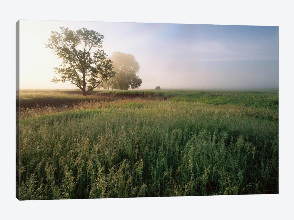Oak Trees Shrouded In Fog, Tallgrass Prairie In Flint Hills Which Has Been Taken Over By Invasive Great Brome Grass, Kansas by Tim Fitzharris 1-piece Canvas Artwork