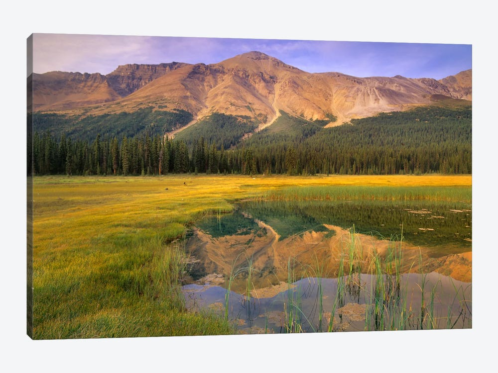 Observation Peak And Coniferous Forest Reflected In Pond, Banff National Park, Alberta, Canada by Tim Fitzharris 1-piece Canvas Art Print